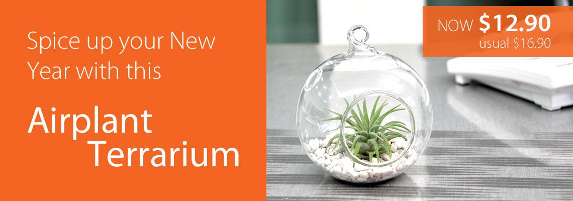 Terrarium Promo