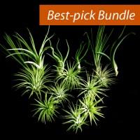 Best-pick Bundle