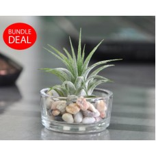 Tealight Ionantha (8-set bundle)